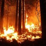 Лесные пожары в России охватывают 15 тыс. га