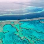 Ученые обнаружили на Большом Барьерном рифе поле водорослей размером со Швейцарию!