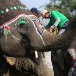 В Непале прошел конкурс красоты среди слонов
