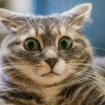Коты способны перенять стрессовое состояние у своих хозяев