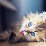 Изображения милых животных повышают производительность труда