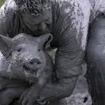 Как прошел свинский фестиваль в Квебеке