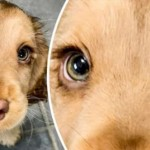 18 животных, которые вызывают недоумение с первого взгляда и восторг — со второго
